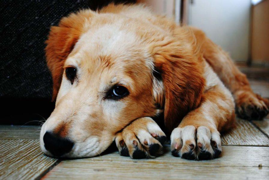 Dog Skin Tag Removal