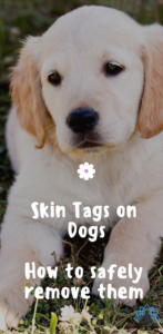 Fighting For Fido Skin Tags On Dogs Skin Tag Removal